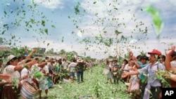 Para petani kokain melemparkan daun kokain di Chimore, Bolivia, sebagai protes kampanye pemerintah untuk memberantas kokain. (Foto: Dok)