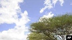 Falanqeyn ku Saabsan Gelida Kenya ee Somalia