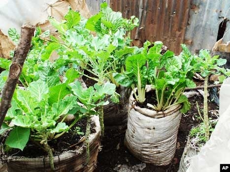 How Much Food Can Really Grow In Urban Agriculture