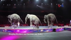 Những con voi rạp xiếc cuối cùng ở Mỹ