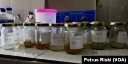 Sampel feses manusia dari beberapa daerah di Bali dan Jawa yang diteliti untuk melihat keberadaan mikroplastik (Foto: VOA/Petrus Riski).