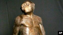 Modelo tridimensional de Lucy, la Australopithecus afarensis y ascendiente humana.