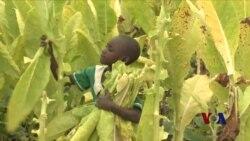 非洲撒哈拉以南地区童工现象严重