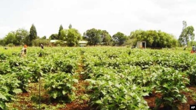 Food Security, HIV/AIDS Treatment and Prevention Closely Linked