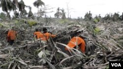 Petani di desa Jeruk Agung, kecamatan Srumbung Kabupaten Magelang Jawa Tengah melakukan pemangkasan pohon salak (Nglumut).