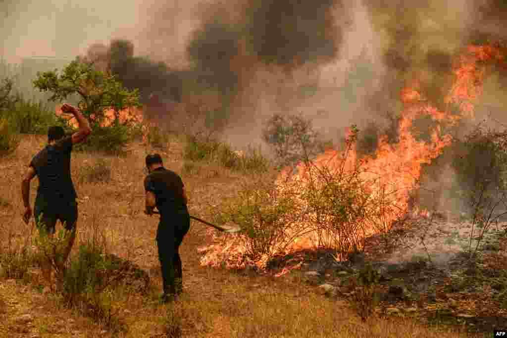 آگ سے درجنوں جنگلی حیات ہلاک اور کئی گھروں کو نقصان پہنچا ہے۔
