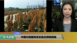 VOA连线(卡拉):中国对美国高粱实施反倾销措施
