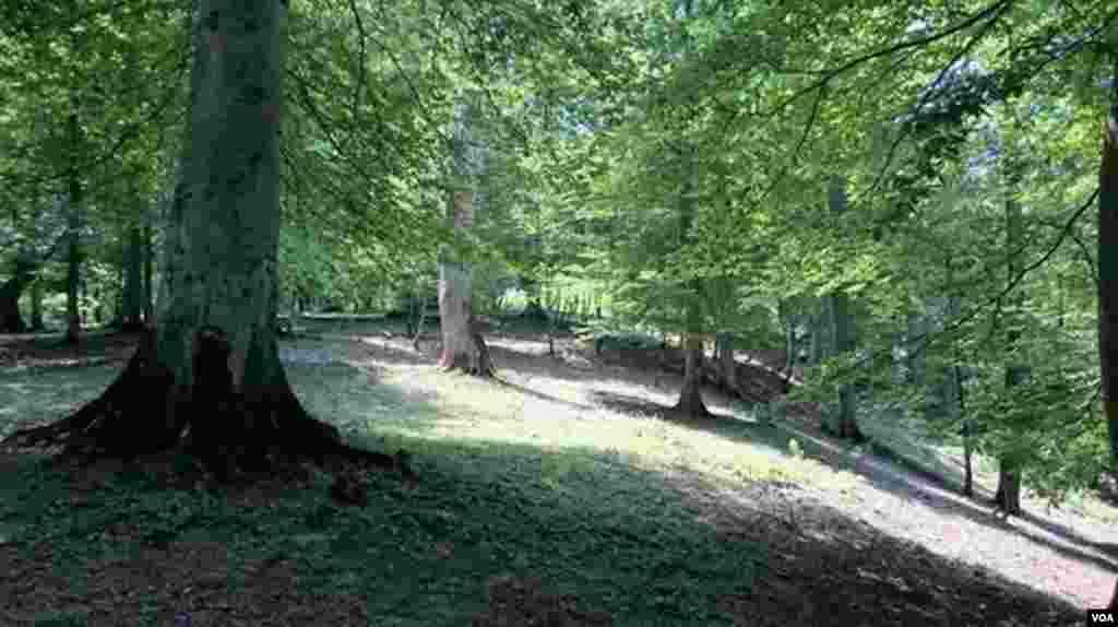 جنگل روستای سی دشت- گیلان عکس: حمید (ارسالی شما)