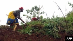 Consolate Niyonkuru cultive sa terre à Kabezi, à 20km de Bujumbura, le 29 mai 2008.