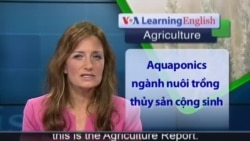 Anh ngữ đặc biệt: Farming Fish and Vegetables Together (VOA-Ag Report)