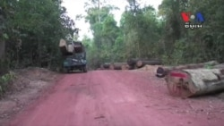 Illegal Logging Ravaging the Last Forests, Activists Say