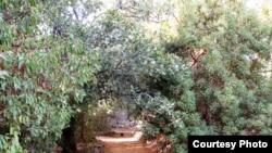 Tel Aviv University Botanical Garden