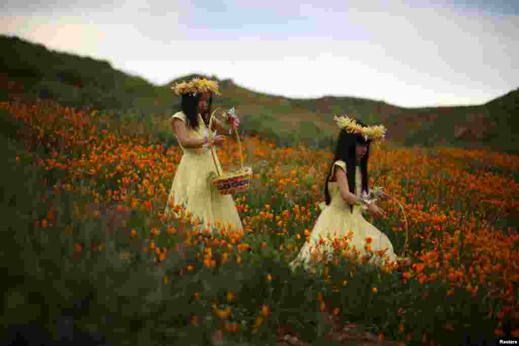 Julia Lu, 5, (L) and Amy Liu, 5, walk through a massive spring wildflower bloom in Lake Elsinore, California, March 14, 2017.