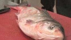 Illinois' Solution to Asian Carp Invasion: Eat Them