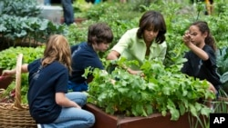 First lady Michelle Obama joins New Jersey school children to harvest the summer crop from White House kitchen garden, Washington, May 28, 2013.