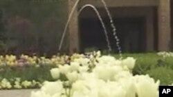 芝加哥植物园里的郁金香