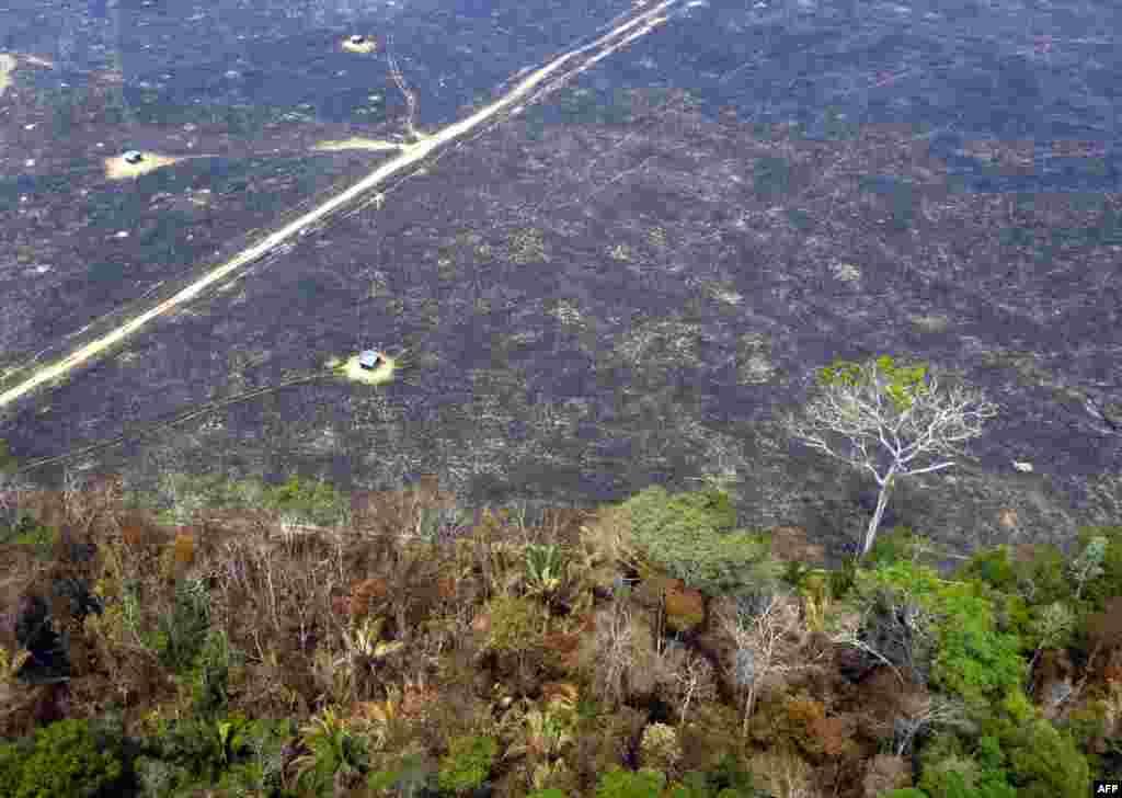 نمایی از یک بخش جنگل امازون که پس از آتشسوزی به خاکستر نشسته است