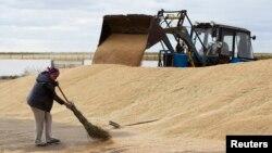 An employee sweeps wheat grain at the Aktyk farm outside Astana, Kazakhstan, September 10, 2013.