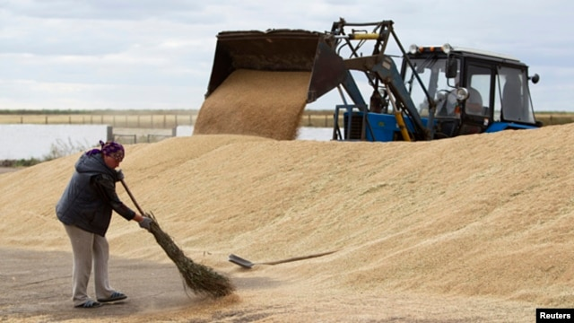 An employee sweeps wheat grain at the Aktyk farm outside Astana, Kazakhstan, September 10, 2013.