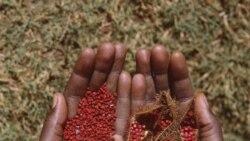 صنعت رنگرزی سنتی پارچه در کشور مالی تغيير می کند