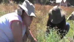Students Do Conservation Work on California Island