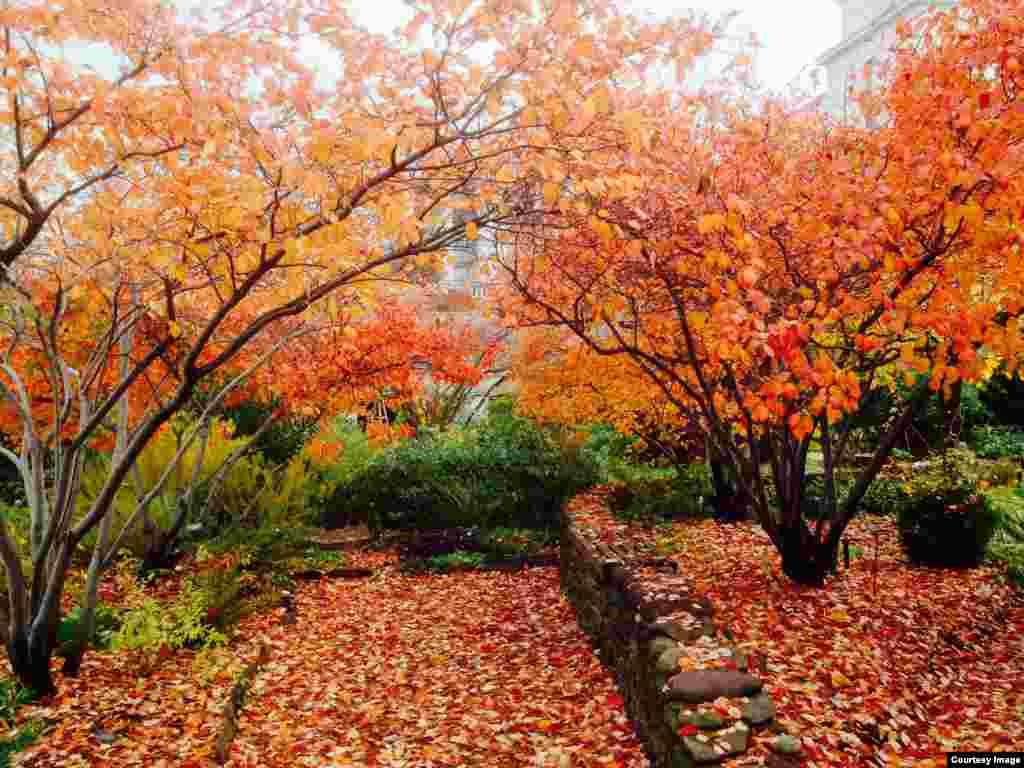 Diaa Bekheet captures splendid late autumn colors of trees and fallen leaves outside Rayburn House Office Building near VOA headquarters in Washington, D.C.