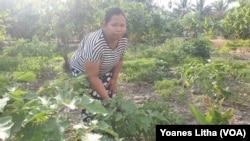 Ibu Hatminah (32) diantara tanaman terung yang ditanaman di pekarangan rumah di desa Jono Oge, Kabupaten Sigi, Sulawesi Tengah, 22 Desember 2019. (Foto: VOA/Yoanes Litha)