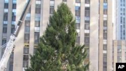 游客和纽约客聚集在洛克菲洛中心观看工人们把圣诞树竖起来