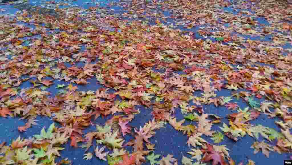 پاییز در مهاباد – آذربایجان غربی عکس: سینا رمن (ارسالی شما)