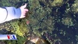 Nhiên liệu làm từ tảo
