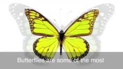 English in a Minute: To Have Butterflies