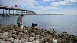 """""""Clean This Beach Up"""", Membersihkan Pantai Miami"""
