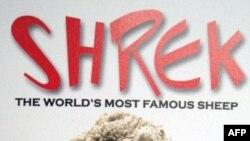 Chú cừu nổi tiếng Shrek