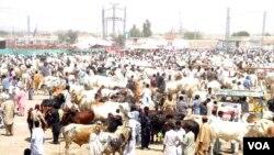 بلوچستان میں قربانی کے جانوروں کی منڈی