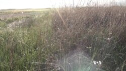 Grazing the Niobrara for Healthy Grasslands