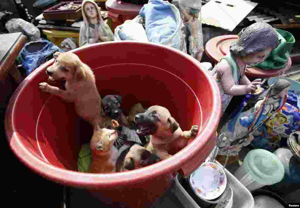 A slum dweller's pets (puppies and a cat) look on from a plastic container next to religious statues and other belongings, after a squatter colony was demolished in Tondo, Manila.