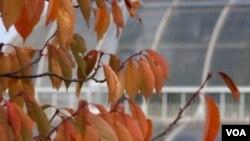 El jardín Kew tiene grandes colecciones de plantas.