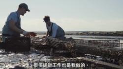 兄弟经营海洋农场 牡蛎生涯天地宽