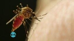 Maisha na Afya Ep. 86: Utafiti mpya unaonyesha chanjo ya Malaria inafanya kazi kwa asilimia 100.