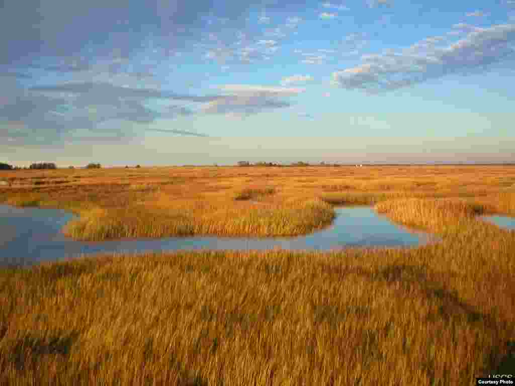 Scientists predict that marshes in the Plum Island Estuary in Massachusetts will submerge under a conservative sea-level rise scenario. (Matthew Kirwan/USGS)