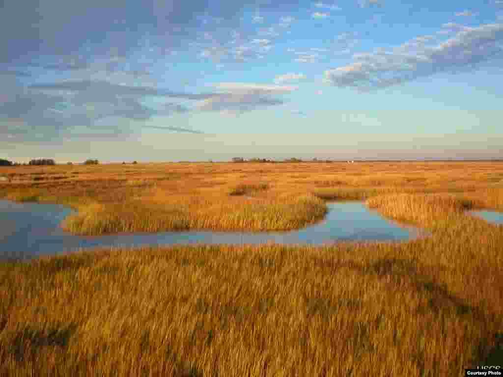 Para ilmuwan memperkirakan bahwa rawa-rawa di Estuari Pulau Plum, Massachusetts akan meluap akibat kenaikan permukaan air laut. (Matthew Kirwan/USGS)