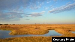 Scientists predict that marshes in the Plum Island Estuary in Massachusetts will submerge if sea level rises as expected. (Matthew Kirwan/USGS)
