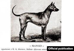Ảnh vẽ chó Phú Quốc tên Mango (Xoài). Ảnh trích từ đặc san Thảo Cầm Viên.