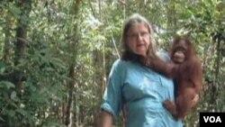 Nuestros entrenadores llevan a los orangutanes al bosque todos los días y les permiten que ellos se enseñen los unos a los otros, explica Biruté Mary Galdikas.
