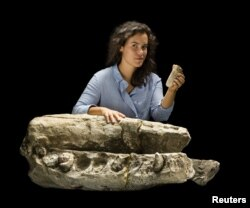 """Alex Boersma, research student at Smithsonian Institution and recent graduate of Vassar College, is shown with skull of Albicetus, meaning """"white whale"""" in this image released Dec. 8, 2015."""