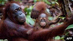Filmi mbi historinë e shpëtimit e rikthimit në jetën shtazore të disa kafshëve jetime