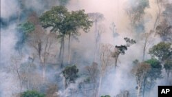 The forest burns near Prey Long, Cambodia in this undated handout photo.