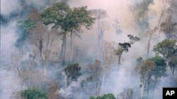 The forest burns near Prey Long, Cambodia, in this undated photo.
