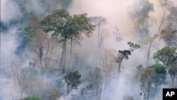 The forest burns near Prey Long, Cambodia in this undated handout photo. Senior government officials and tycoons in Cambodia, including relatives of the prime minister, are illegally felling some of that country's last, once great forests while internatio