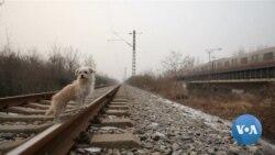 """วงการบันเทิงจีน """"โคลนสุนัข"""" สานต่อความดังเจ้าตูบซุเปอร์สตาร์"""